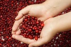 Canberry can help Urinary Tract Infection