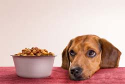 Is homemade dog food better than commercial dry food