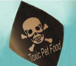 Some of the food are toxic for your dog. Be careful when you feed them.